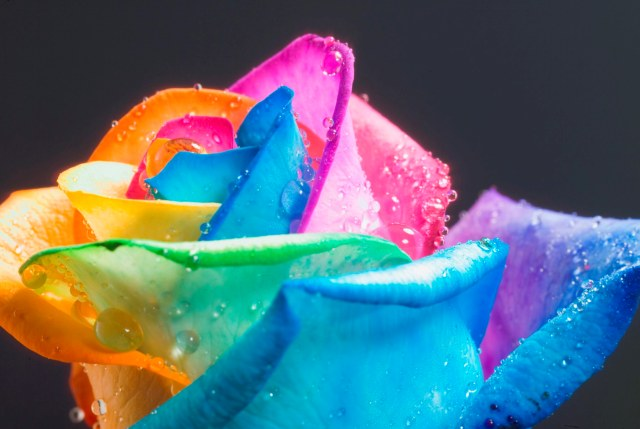 DIY rainbow rose 3