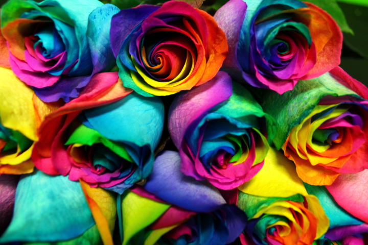 DIY rainbow rose 4