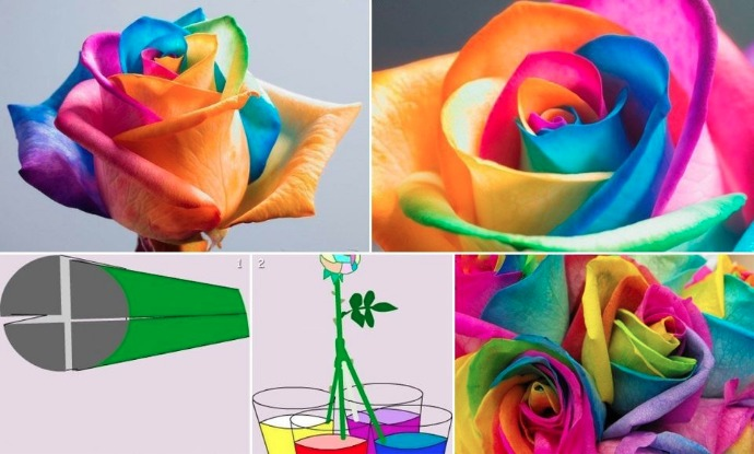 DIY rainbow rose tutorial