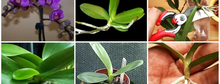 How to Grow Orchid at Home