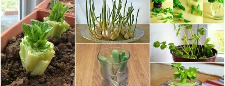 13 Regrow Vegetables That You Can Plant Again And Again