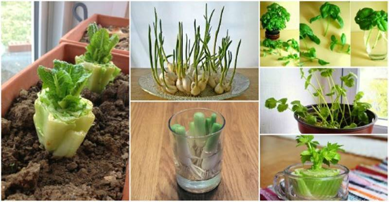 13 Regrow Vegetables That You Can Grow Again And Again