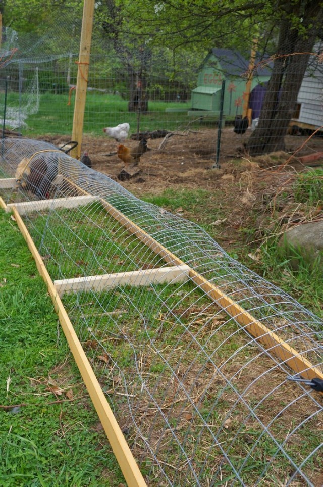 DIY Chicken Tunnel for Backyard1