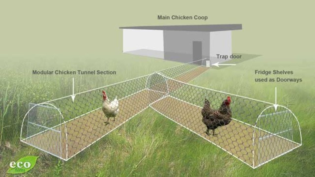 DIY Chicken Tunnel for Backyard10