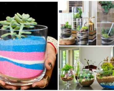Beesdiy do it yourself with our most creative ideas diy modern sand art terrarium tutorial solutioingenieria Image collections